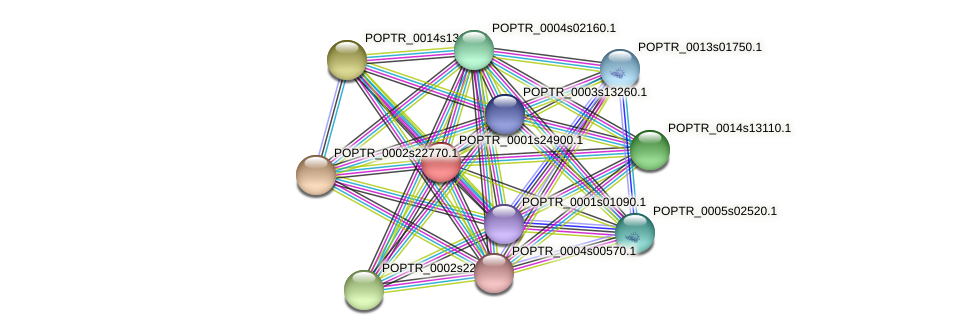 POPTR_0001s24900.1 protein (Populus trichocarpa) - STRING interaction network