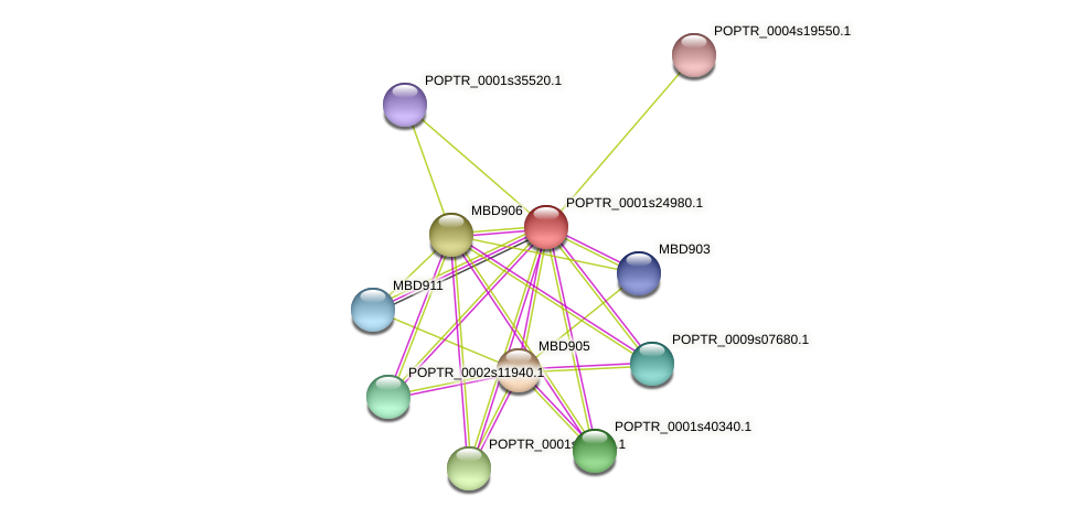 POPTR_0001s24980.1 protein (Populus trichocarpa) - STRING interaction network