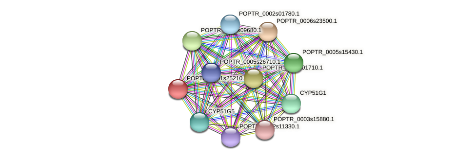 POPTR_0001s25210.1 protein (Populus trichocarpa) - STRING interaction network