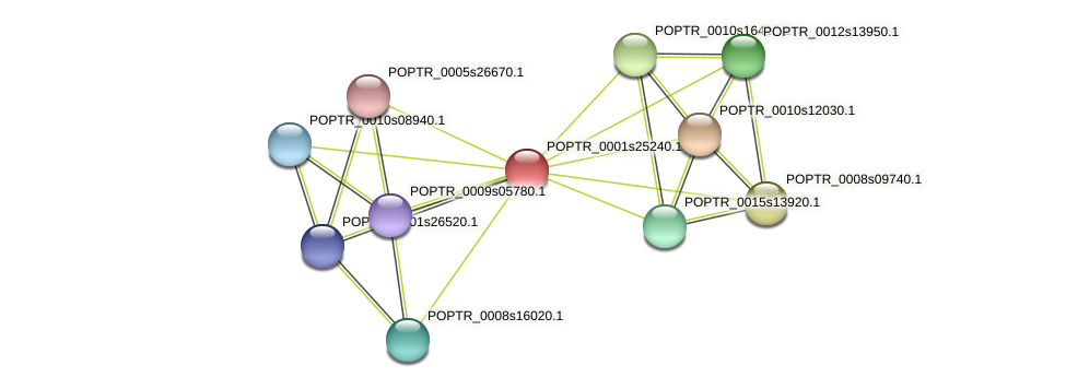 POPTR_0001s25240.1 protein (Populus trichocarpa) - STRING interaction network