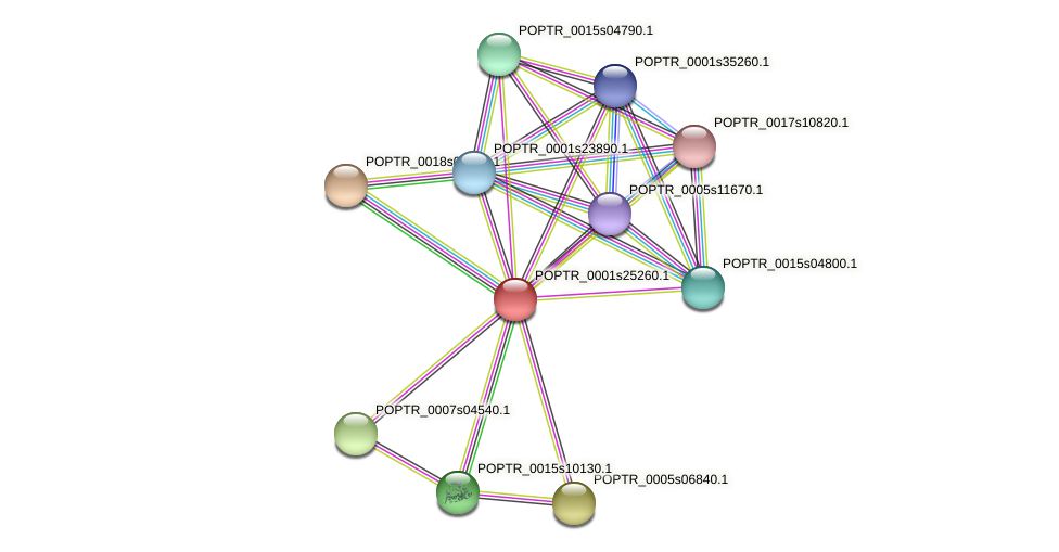 POPTR_0001s25260.1 protein (Populus trichocarpa) - STRING interaction network