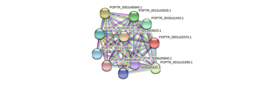 POPTR_0001s25370.1 protein (Populus trichocarpa) - STRING interaction network