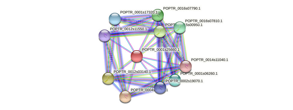 POPTR_0001s25660.1 protein (Populus trichocarpa) - STRING interaction network