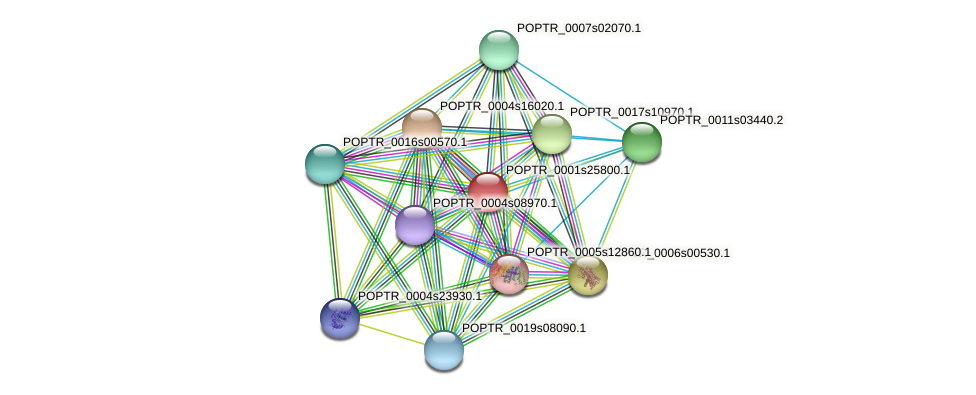 POPTR_0001s25800.1 protein (Populus trichocarpa) - STRING interaction network