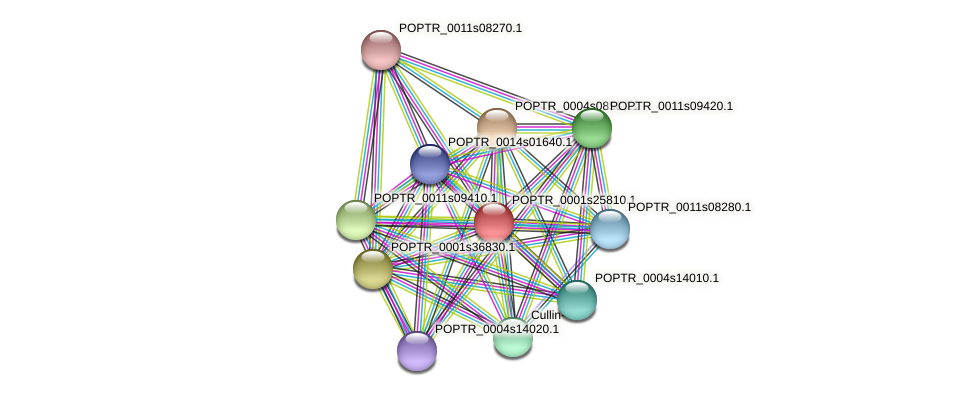 POPTR_0001s25810.1 protein (Populus trichocarpa) - STRING interaction network
