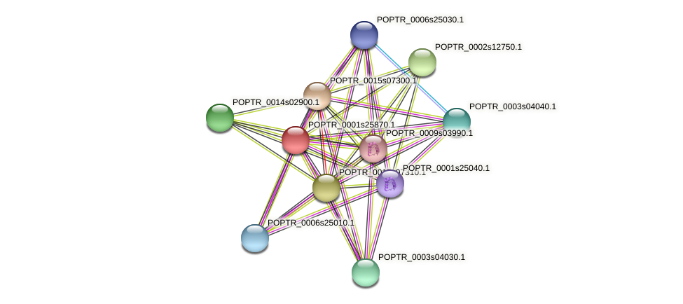 POPTR_0001s25870.1 protein (Populus trichocarpa) - STRING interaction network