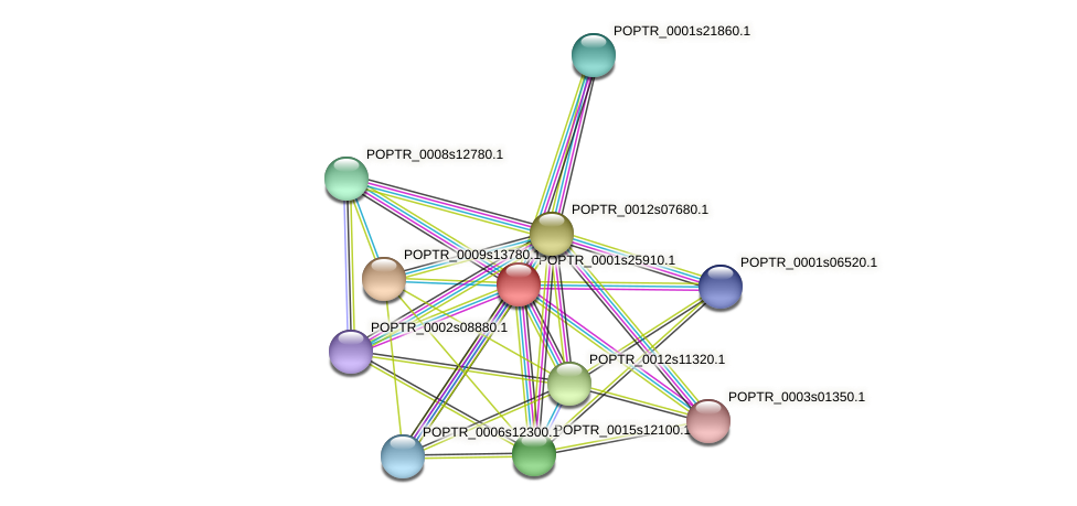 POPTR_0001s25910.1 protein (Populus trichocarpa) - STRING interaction network