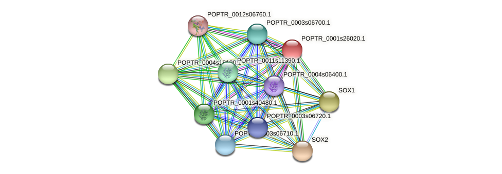 POPTR_0001s26020.1 protein (Populus trichocarpa) - STRING interaction network