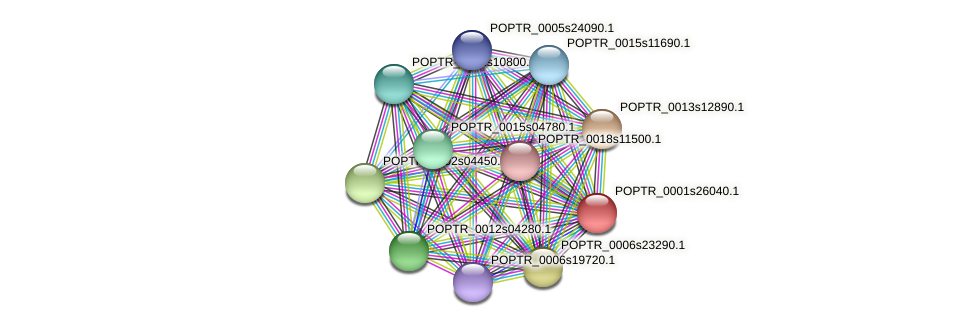 POPTR_0001s26040.1 protein (Populus trichocarpa) - STRING interaction network