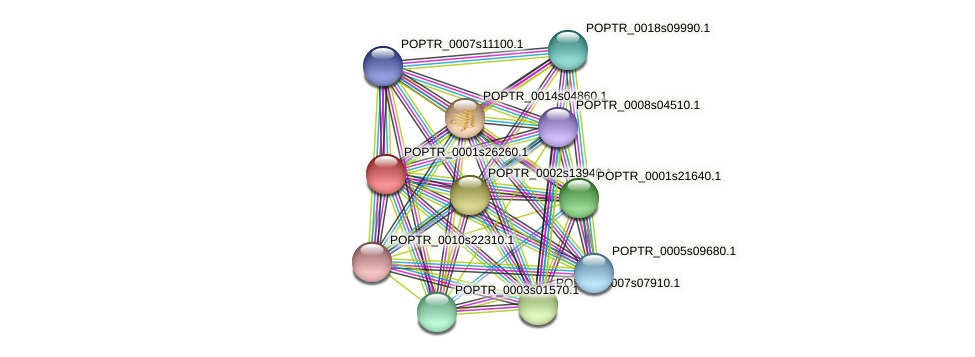 POPTR_0001s26260.1 protein (Populus trichocarpa) - STRING interaction network