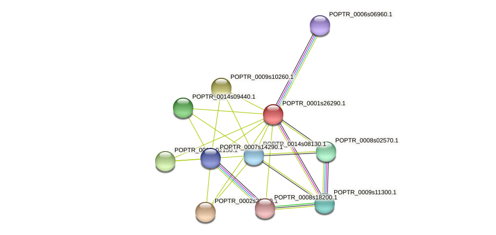 POPTR_0001s26290.1 protein (Populus trichocarpa) - STRING interaction network