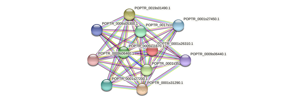 POPTR_0001s26310.1 protein (Populus trichocarpa) - STRING interaction network