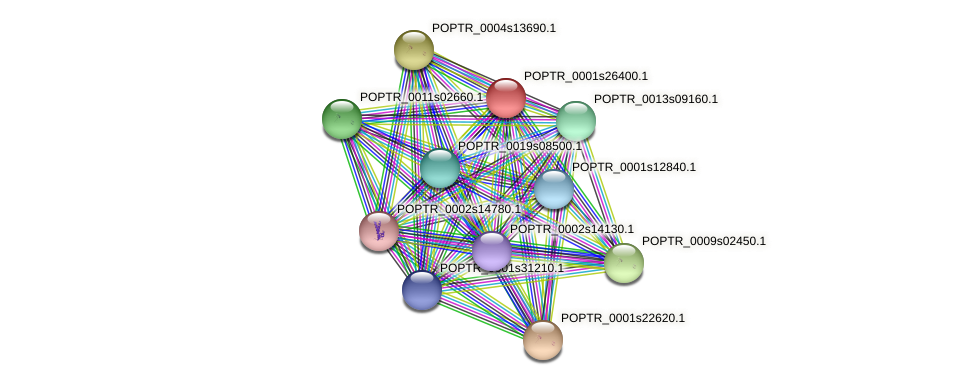 POPTR_0001s26400.1 protein (Populus trichocarpa) - STRING interaction network