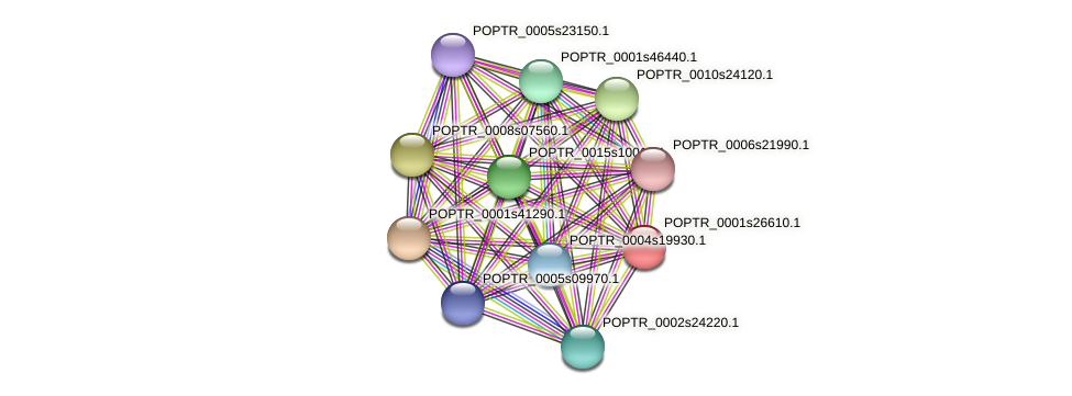 POPTR_0001s26610.1 protein (Populus trichocarpa) - STRING interaction network