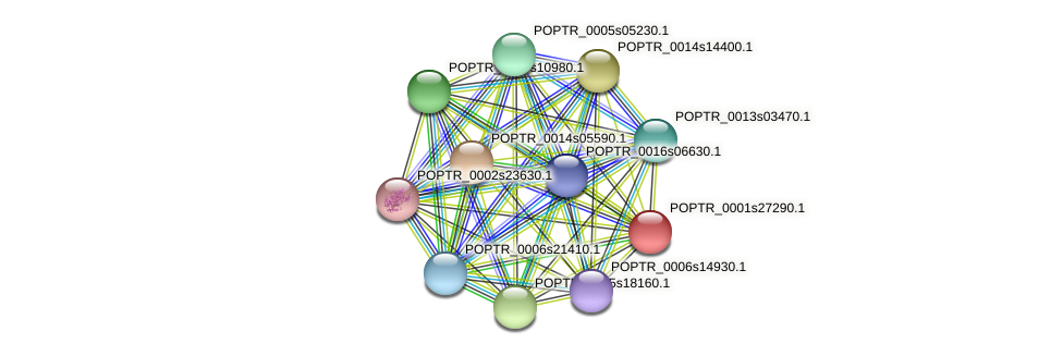 POPTR_0001s27290.1 protein (Populus trichocarpa) - STRING interaction network