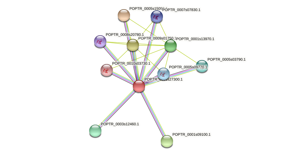 POPTR_0001s27300.1 protein (Populus trichocarpa) - STRING interaction network