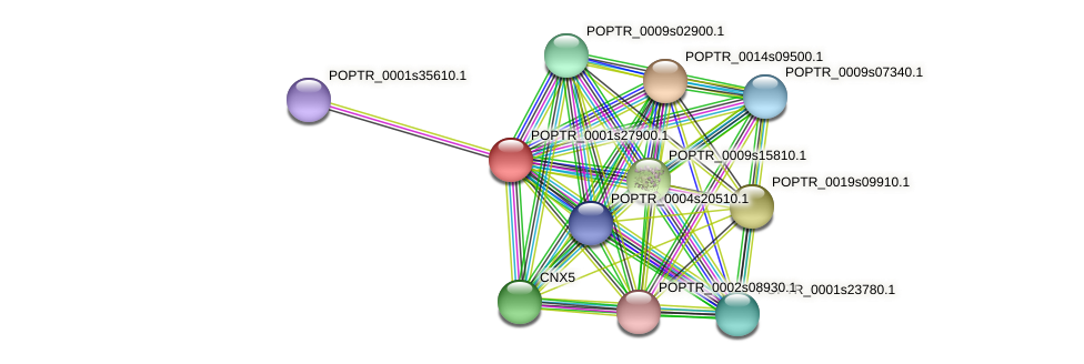 POPTR_0001s27900.1 protein (Populus trichocarpa) - STRING interaction network