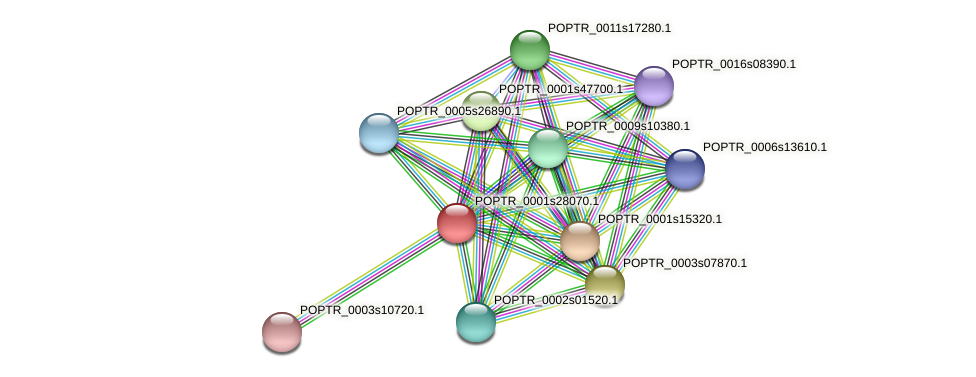 POPTR_0001s28070.1 protein (Populus trichocarpa) - STRING interaction network