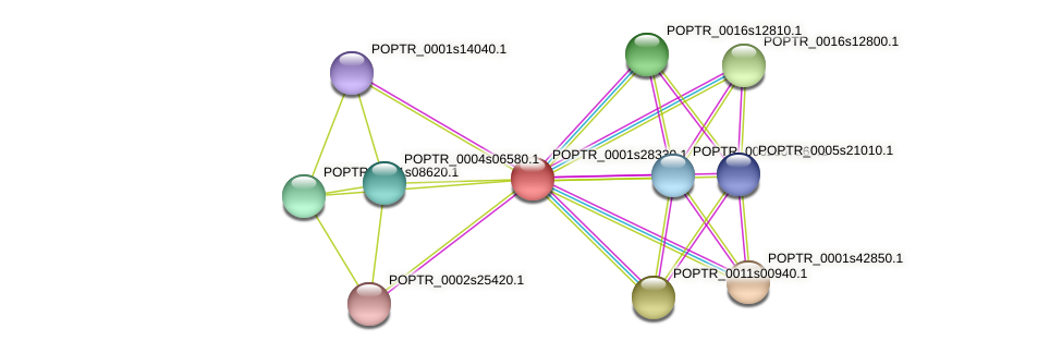 POPTR_0001s28330.1 protein (Populus trichocarpa) - STRING interaction network