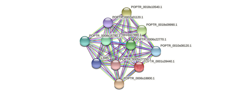 POPTR_0001s28440.1 protein (Populus trichocarpa) - STRING interaction network