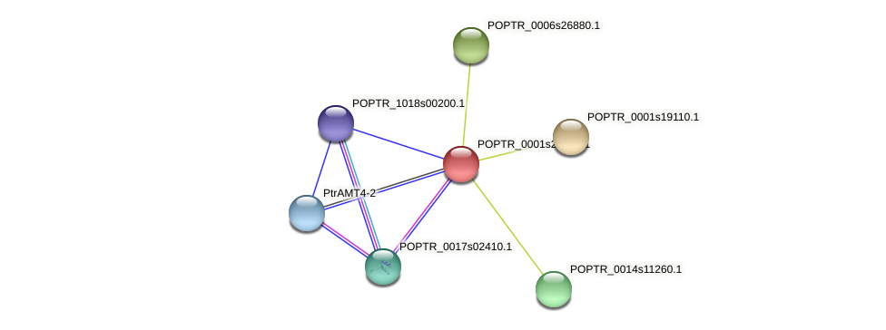POPTR_0001s28480.1 protein (Populus trichocarpa) - STRING interaction network