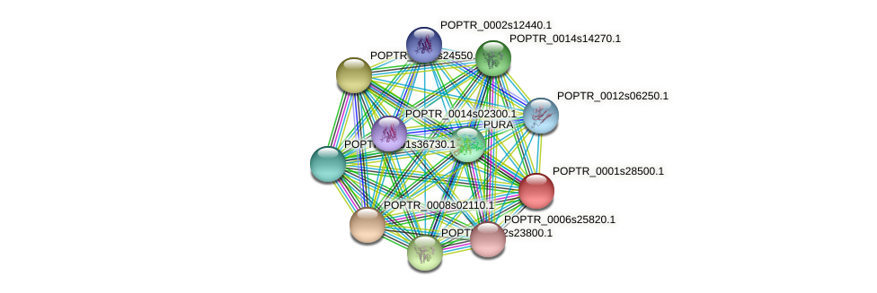 POPTR_0001s28500.1 protein (Populus trichocarpa) - STRING interaction network