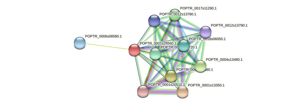 POPTR_0001s28560.1 protein (Populus trichocarpa) - STRING interaction network