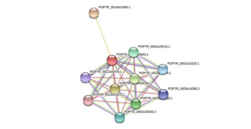 POPTR_0001s28640.1 protein (Populus trichocarpa) - STRING interaction network