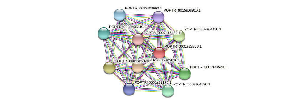 POPTR_0001s28800.1 protein (Populus trichocarpa) - STRING interaction network
