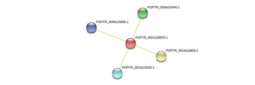 POPTR_0001s28870.1 protein (Populus trichocarpa) - STRING interaction network