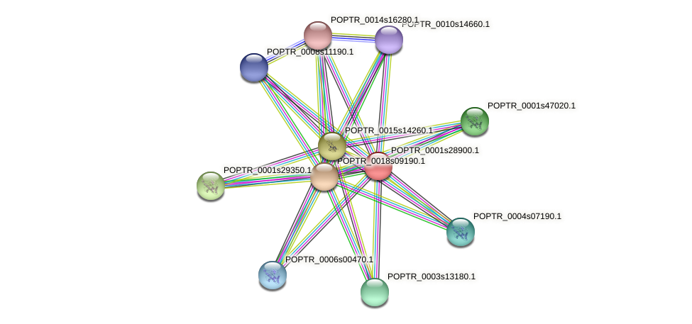 POPTR_0001s28900.1 protein (Populus trichocarpa) - STRING interaction network