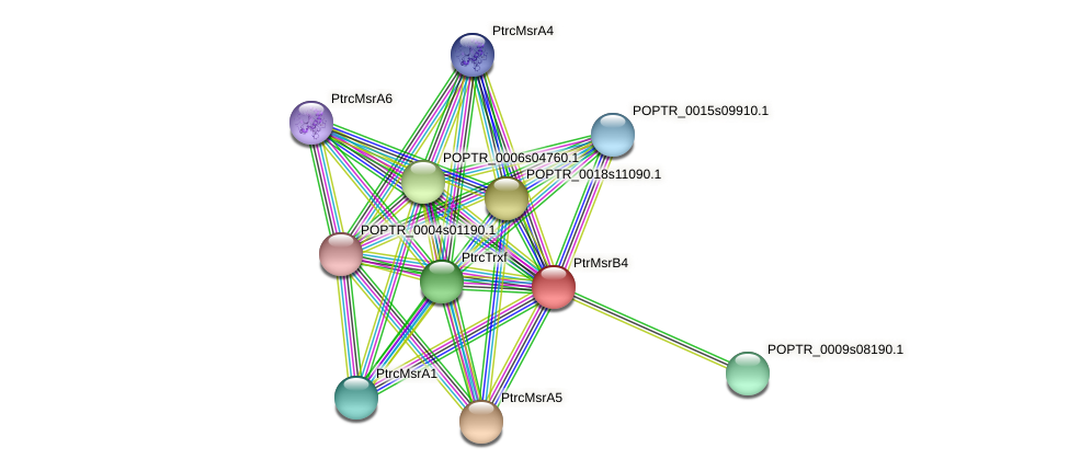 POPTR_0001s29320.1 protein (Populus trichocarpa) - STRING interaction network