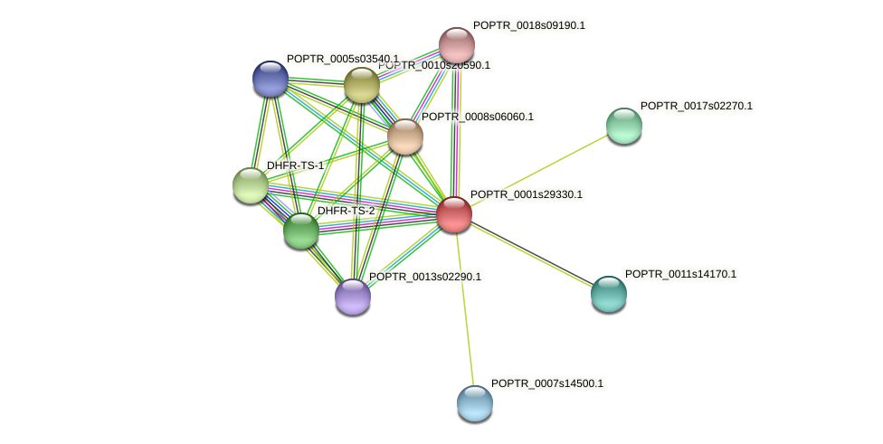 POPTR_0001s29330.1 protein (Populus trichocarpa) - STRING interaction network