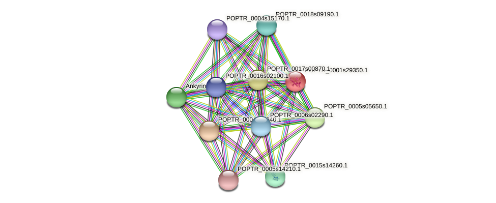 POPTR_0001s29350.1 protein (Populus trichocarpa) - STRING interaction network