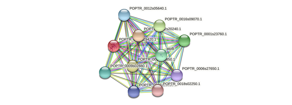 POPTR_0001s29420.1 protein (Populus trichocarpa) - STRING interaction network