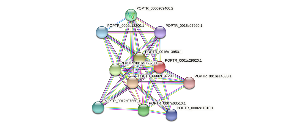 POPTR_0001s29620.1 protein (Populus trichocarpa) - STRING interaction network