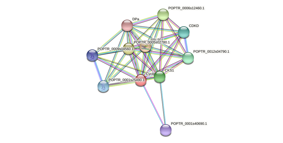 POPTR_0001s29970.1 protein (Populus trichocarpa) - STRING interaction network