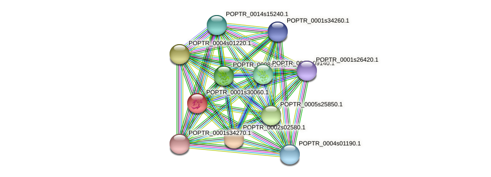 POPTR_0001s30060.1 protein (Populus trichocarpa) - STRING interaction network
