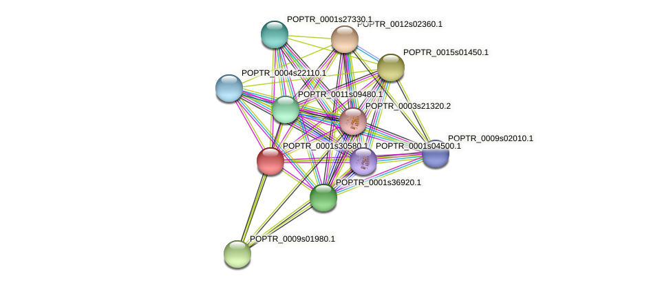POPTR_0001s30580.1 protein (Populus trichocarpa) - STRING interaction network
