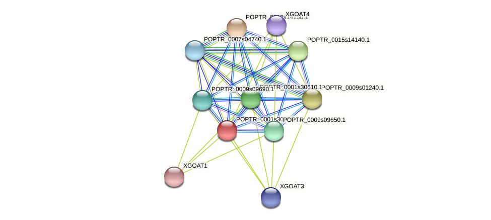 POPTR_0001s30620.1 protein (Populus trichocarpa) - STRING interaction network