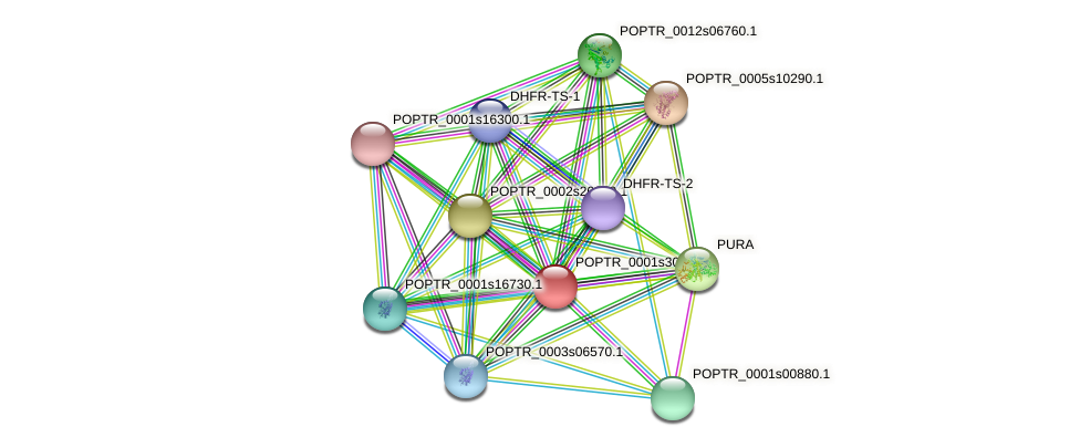 POPTR_0001s30820.1 protein (Populus trichocarpa) - STRING interaction network