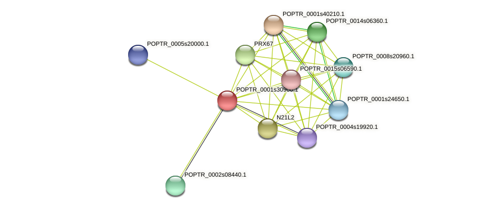 POPTR_0001s30900.1 protein (Populus trichocarpa) - STRING interaction network