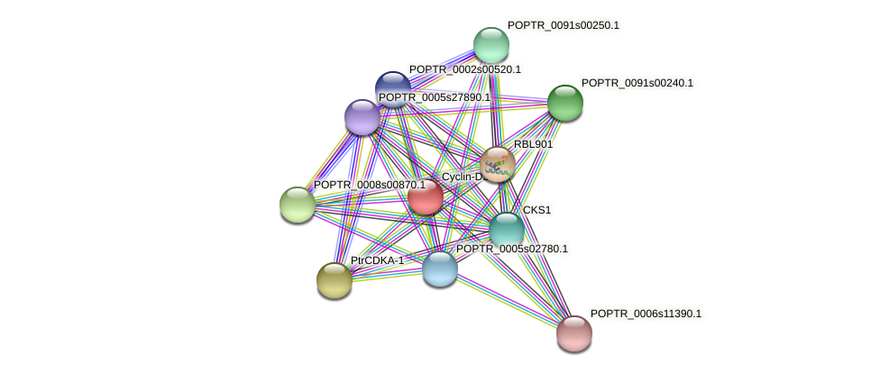 POPTR_0001s30920.1 protein (Populus trichocarpa) - STRING interaction network