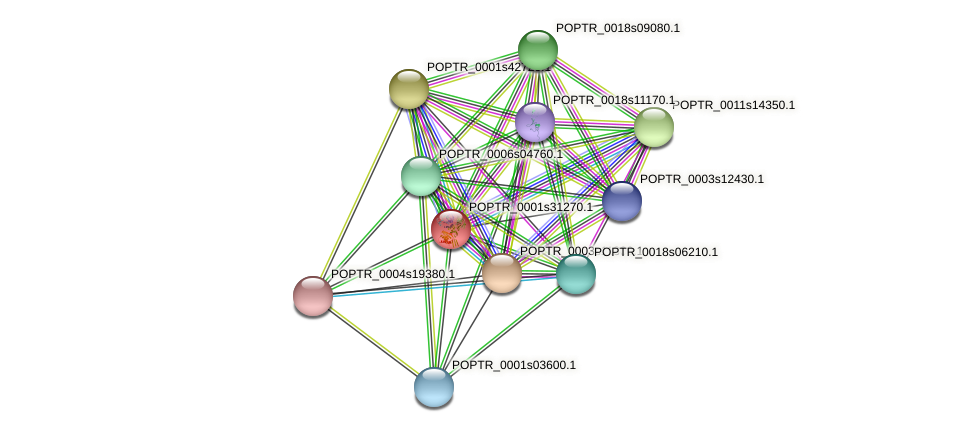 POPTR_0001s31270.1 protein (Populus trichocarpa) - STRING interaction network