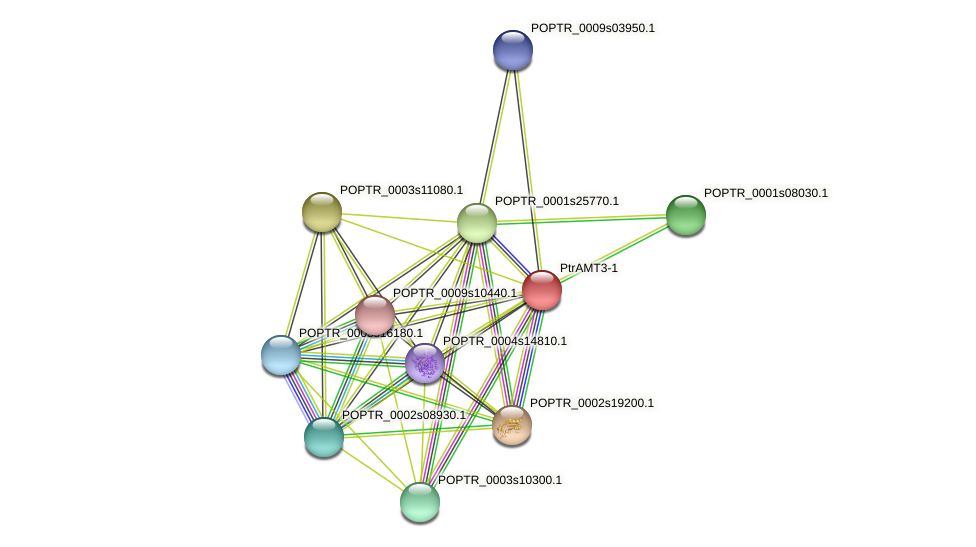 POPTR_0001s31280.1 protein (Populus trichocarpa) - STRING interaction network