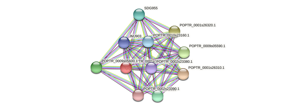 POPTR_0001s31290.1 protein (Populus trichocarpa) - STRING interaction network