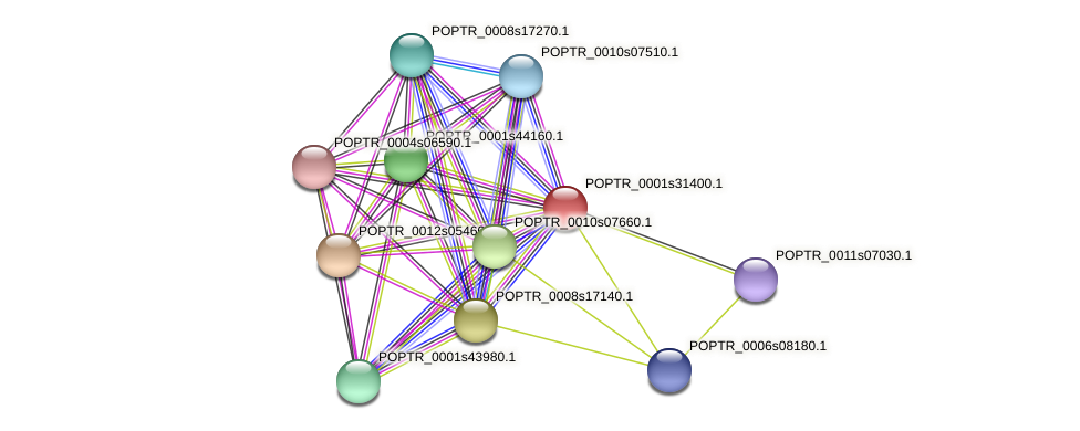 POPTR_0001s31400.1 protein (Populus trichocarpa) - STRING interaction network