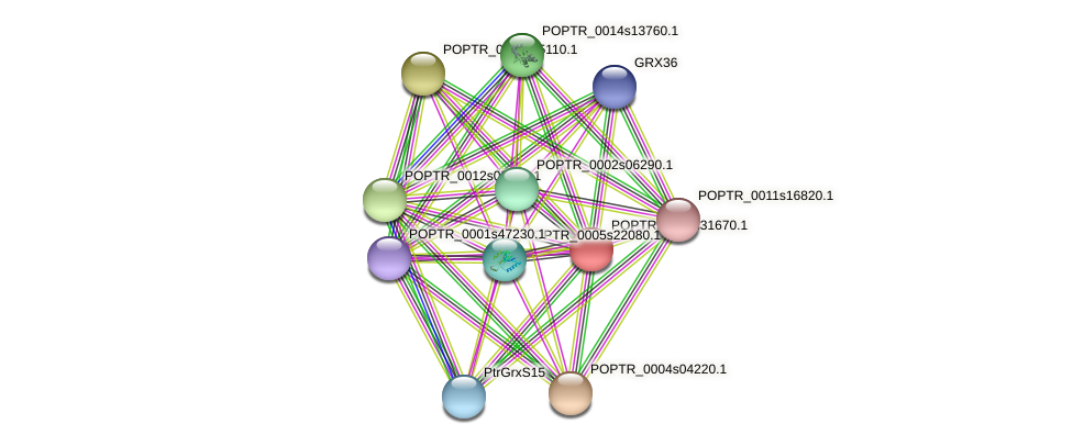 POPTR_0001s31670.1 protein (Populus trichocarpa) - STRING interaction network