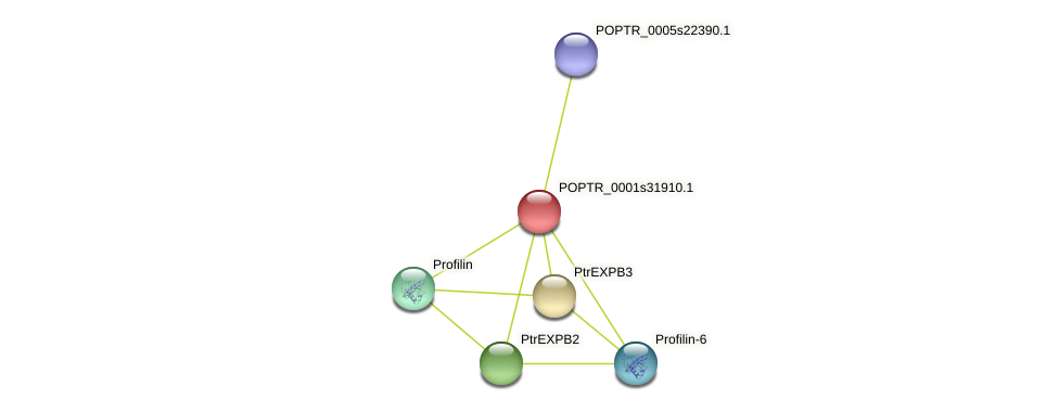 POPTR_0001s31910.1 protein (Populus trichocarpa) - STRING interaction network