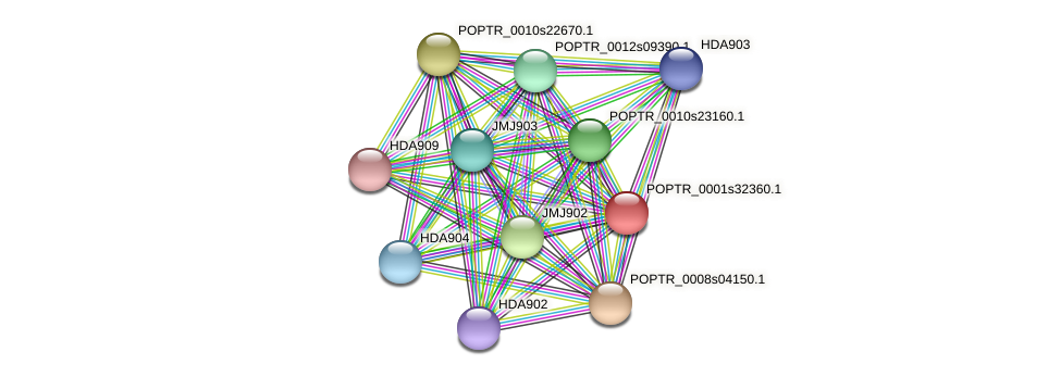 POPTR_0001s32360.1 protein (Populus trichocarpa) - STRING interaction network